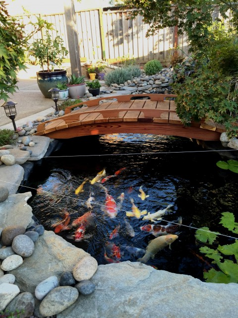 Japanese bridges photo gallery for Fish pond bridges
